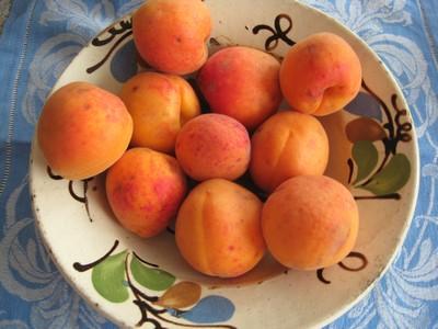 aprikosen marillen